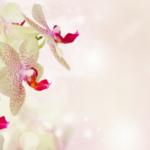 J'entretiens mon orchidée